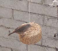 Bird on Seed Bell